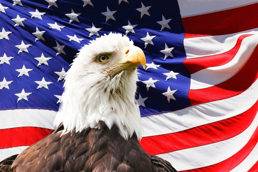 eagle-219679_1280.jpg